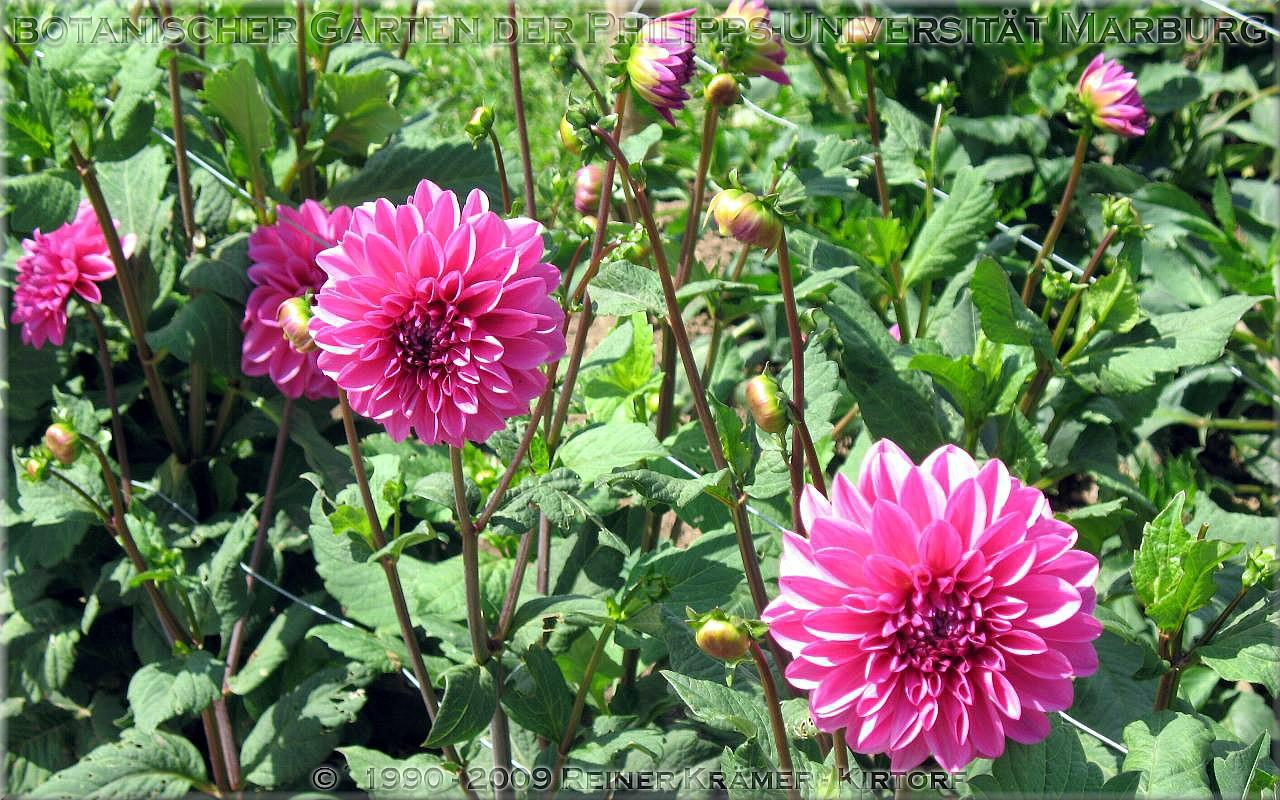 legen Sie sich einen schöneren Garten an, es lohnt sich!
