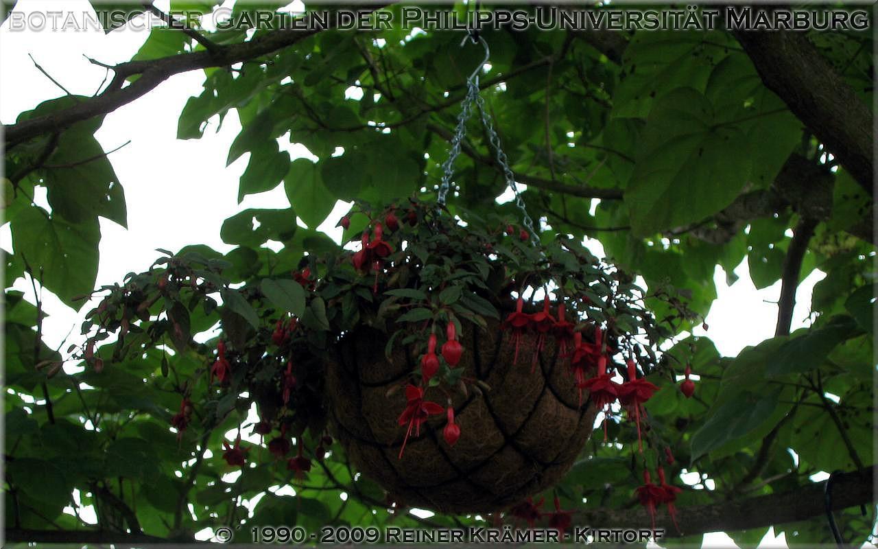 legen Sie sich einen schöneren Garten mit Rhododendren und Azaleen an, es lohnt sich!