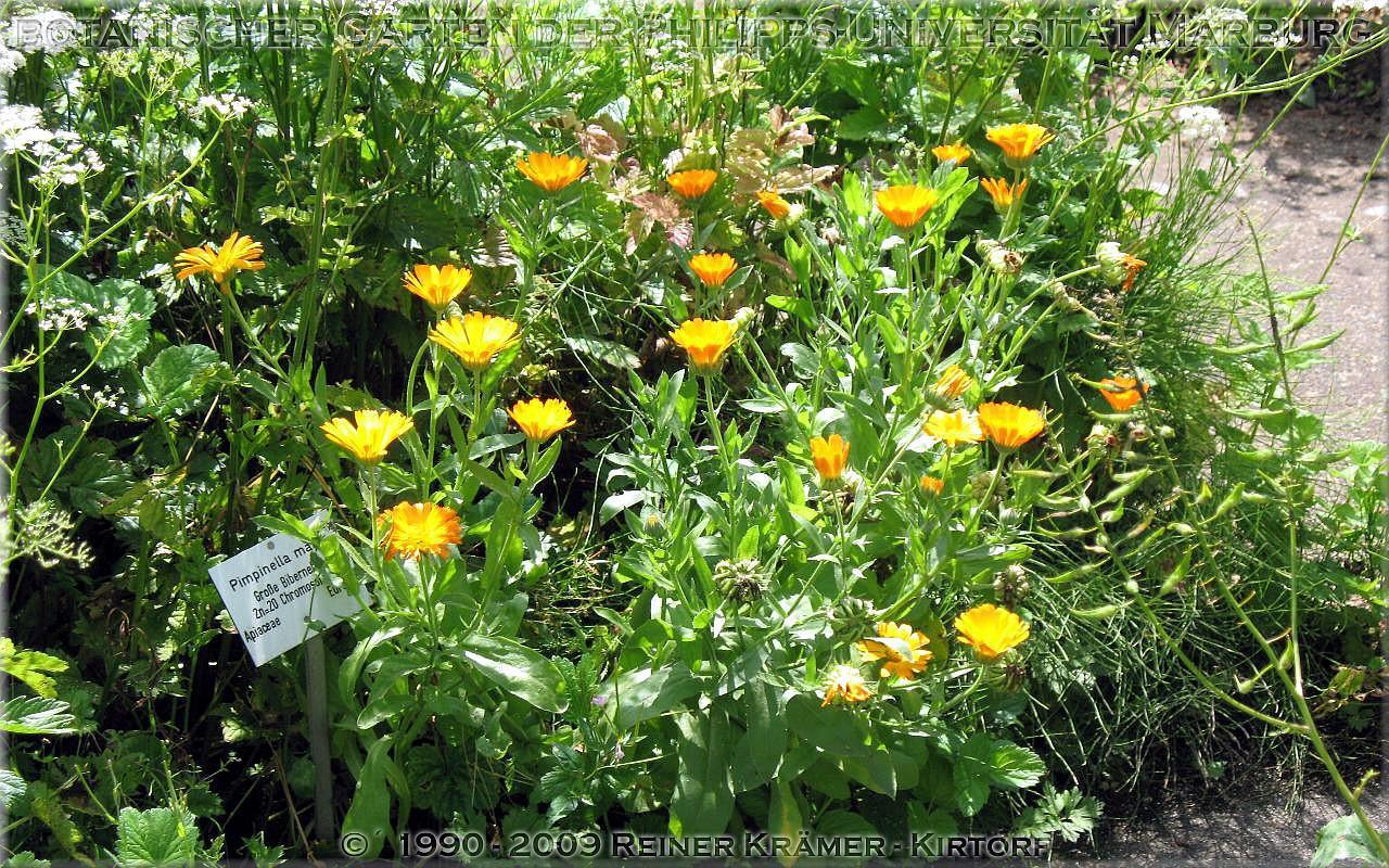 legen Sie sich einen sch�neren Garten an, es lohnt sich!