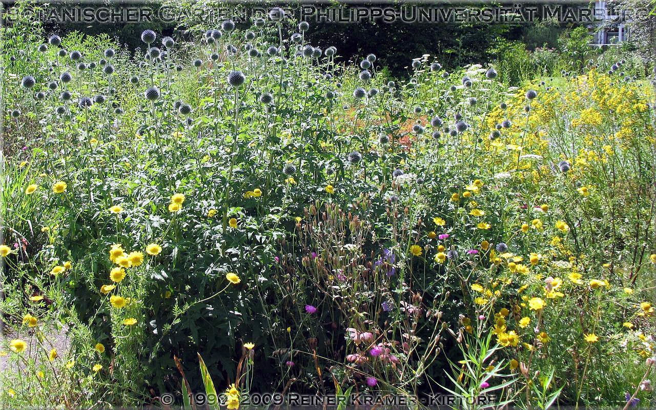 legen Sie sich einen sch��neren Garten an, es lohnt sich!