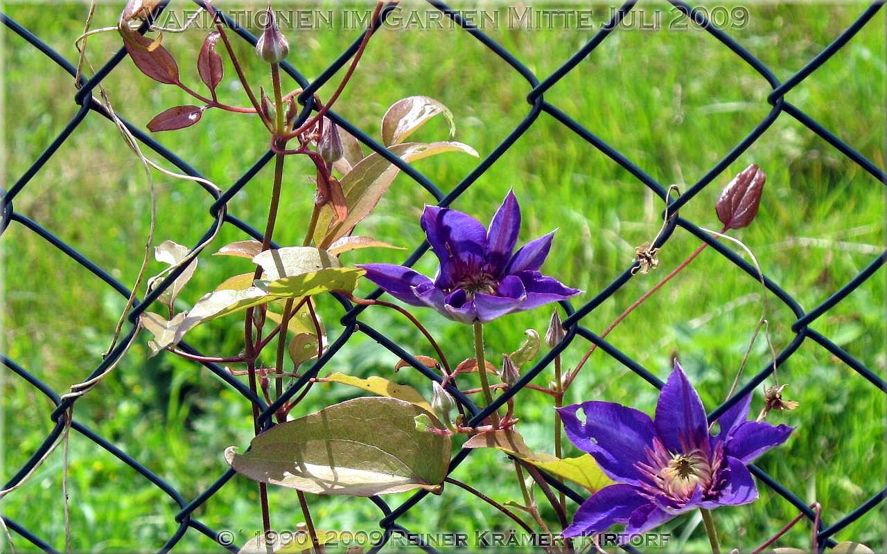 legen Sie sich einen sch�neren Garten mit Rhododendren und Azaleen an, es lohnt sich!
