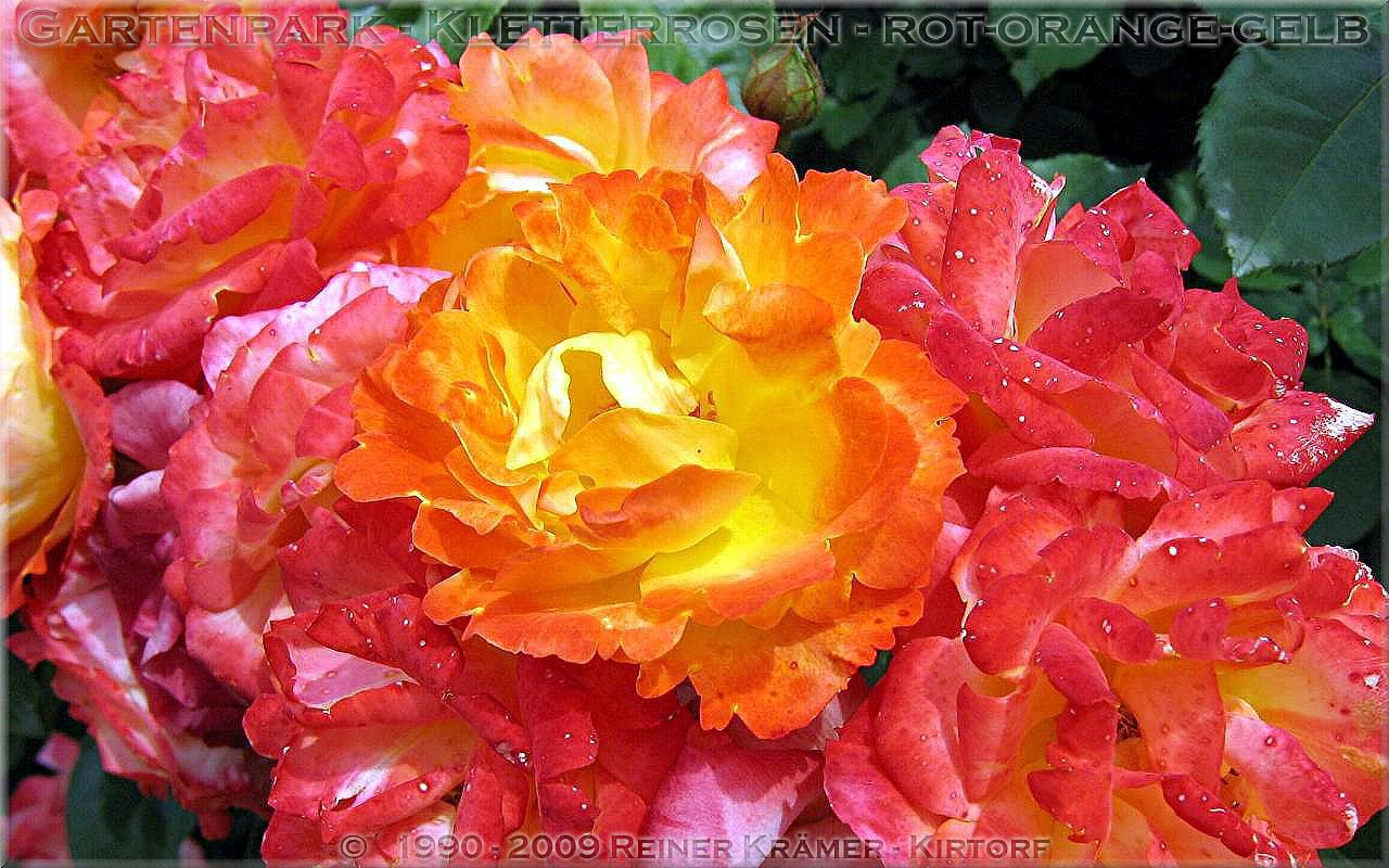 legen Sie sich einen sch neren Garten mit Rhododendren und Azaleen an, es lohnt sich!